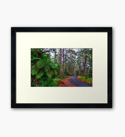 Rainforest - Port Macquarie - Australia Framed Print
