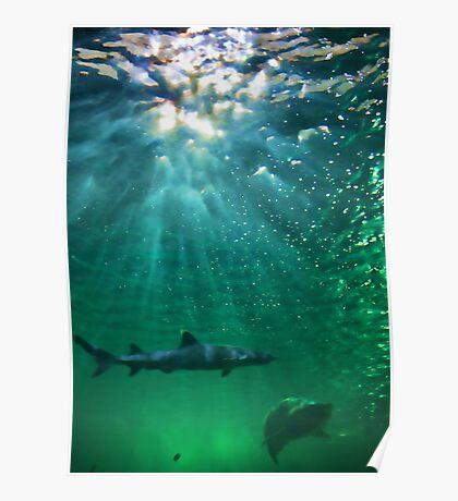 Predators! Sydney Aquarium - Australia Poster
