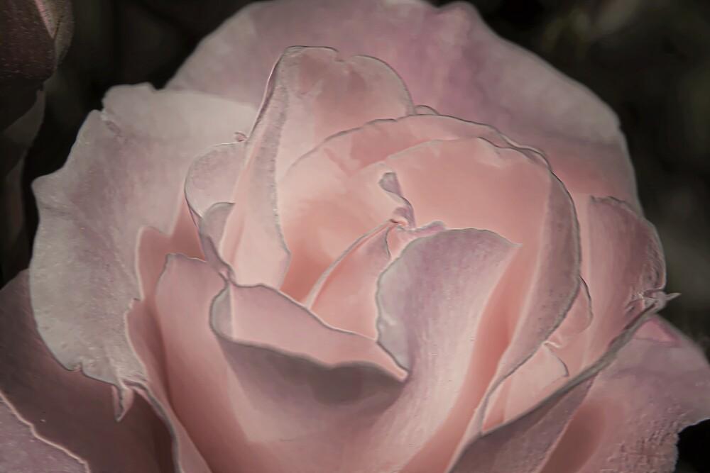 Pink Flower by Dawn van Doorn