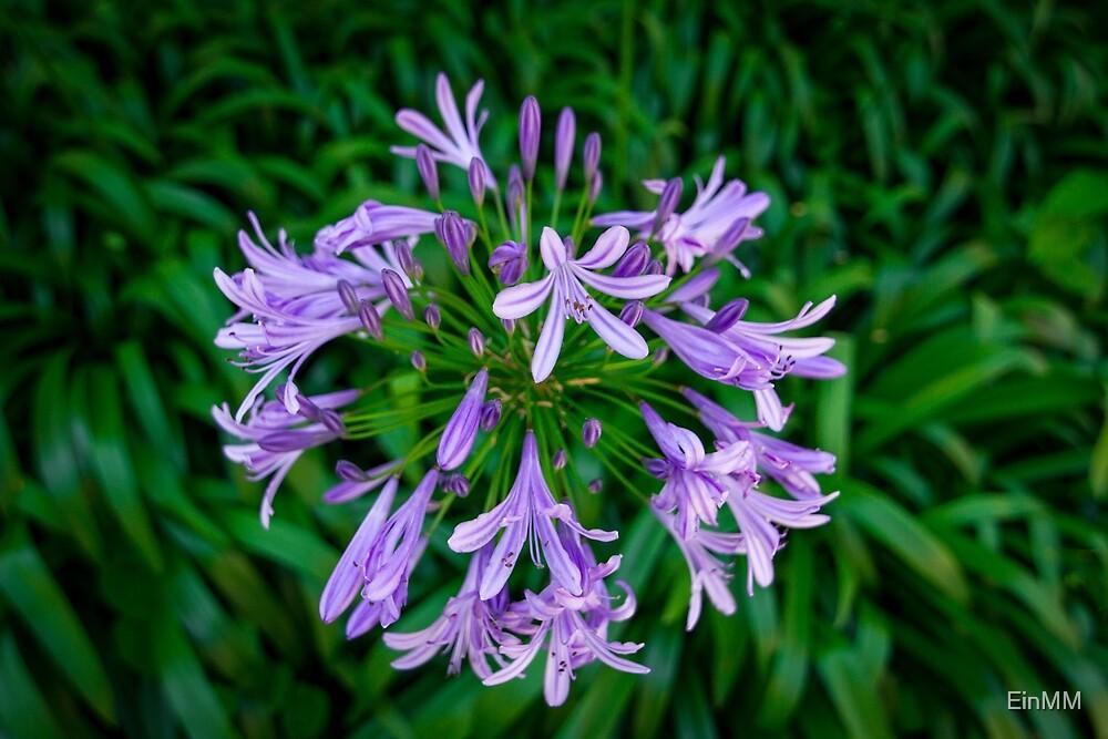 Flower by EinMM by EinMM
