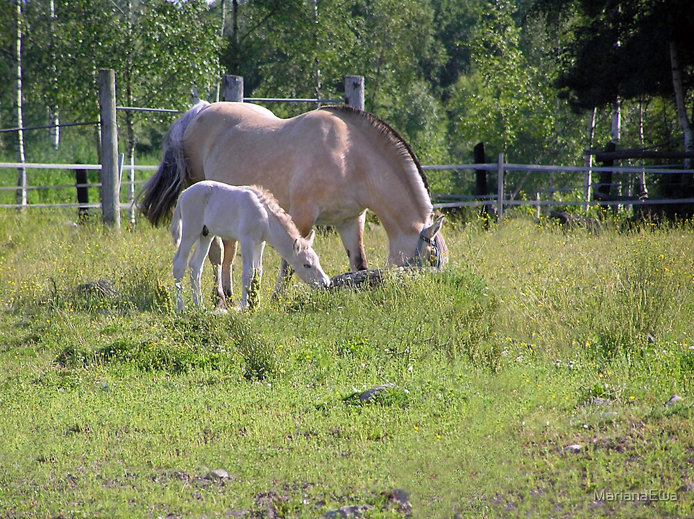 Fjord horse with foal by MarianaEwa