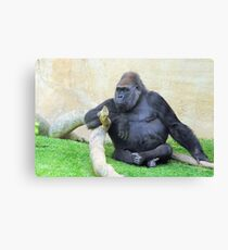Just Chilling Canvas Print