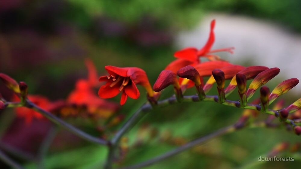 Red flowers by dawnforests