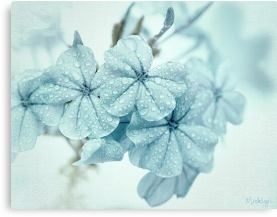 Plumbago is the language that my garden speaks in summer... by micklyn