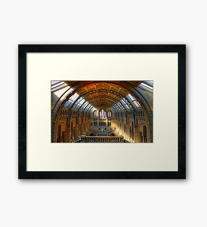 Natural History Museum - London Framed Print
