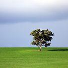 Australian Landscape by Gareth Bowell