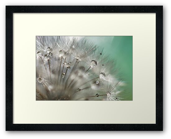 Silver Mint Dandelion by micklyn