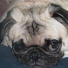 I'm Resting Don't Bother Me by Linda Miller Gesualdo