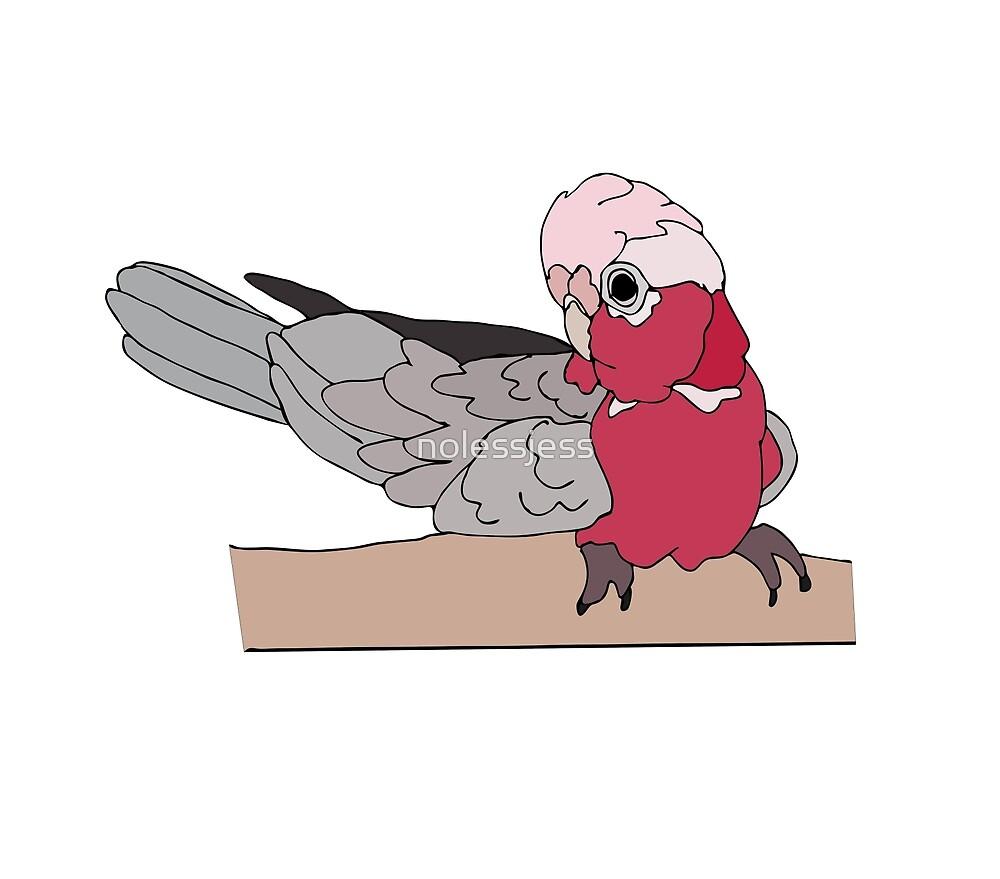 Galah Cockatoo by nolessjess