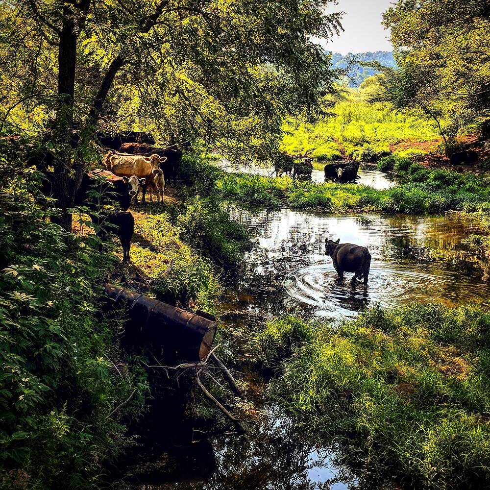 Cow Haven by hollyarnoldart