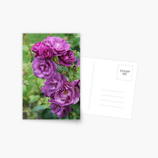 Frantasia Postcard