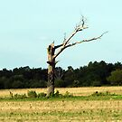 One Lonely Tree  by Leslie Patton