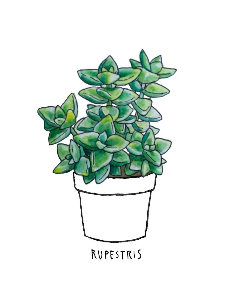 Succulent - Rupestris by katetortland