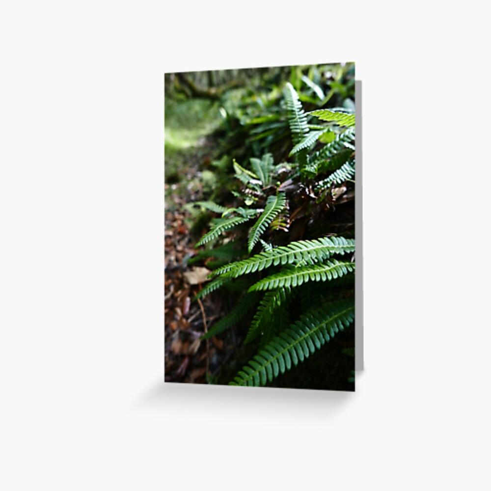 Hard Fern (Blechnum spicant) Greeting Card