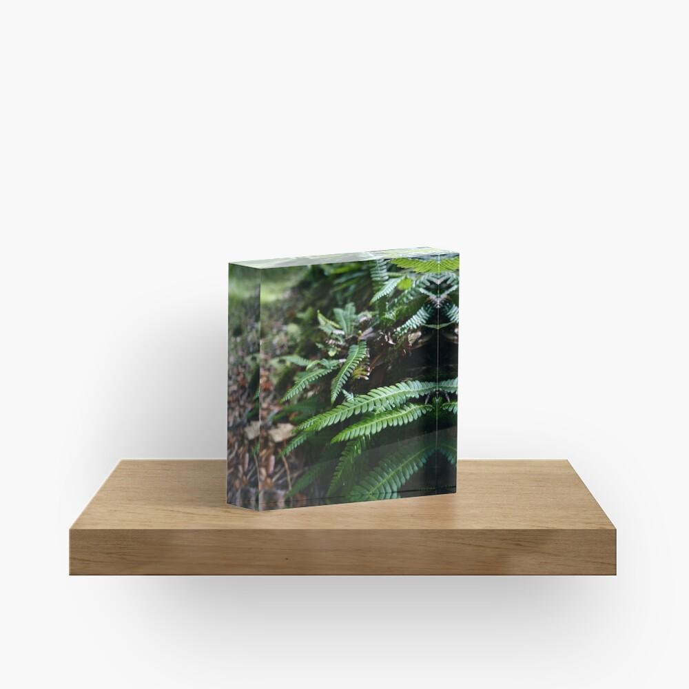 Hard Fern (Blechnum spicant) Acrylic Block