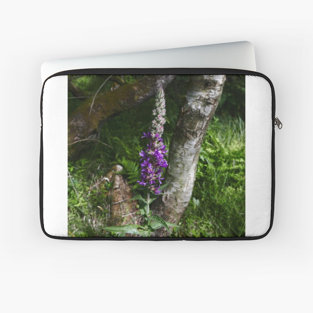 Purple Loosestrife (Lythrum salicaria) Laptop Sleeve