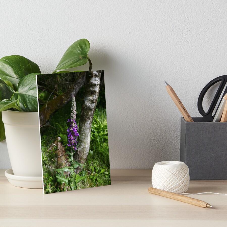Purple Loosestrife (Lythrum salicaria) Art Board Print