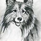 """Shetland Sheepdog """"Sheltie"""" by Linda Costello Hinchey"""