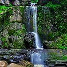 Filmore Glen State Park I by PJS15204