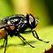 Flies in Macro