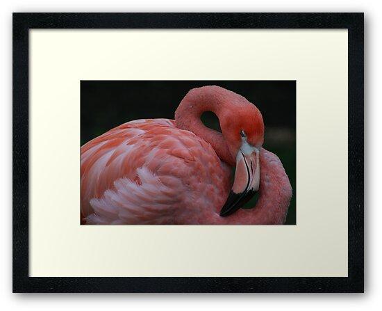 Dream Pink by Dean Mucha