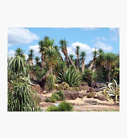 Arid Zone  Photographic Print