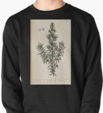 A curious herbal Elisabeth Blackwell John Norse Samuel Harding 1737 0408 Rosemary Pullover
