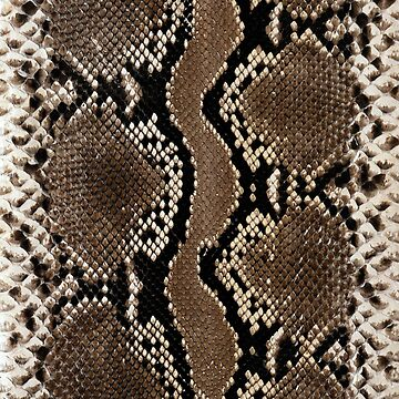 Faux Rock Python Snake Skin Design by Digitalbcon