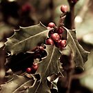 Holly bush with red berries III von VanGalt