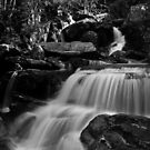 River in Mono by Thomas Fitzgerald