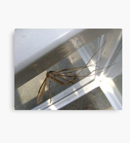 weightless (Cranefly) Metal Print