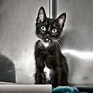 This Is Ethel. How Cute Is She? by Mark Ross