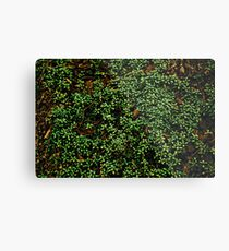 Texture vines with brick wall red bricks climbing green jungle vines and wild plants vintage eroded grunge style urban pattern Metal Print
