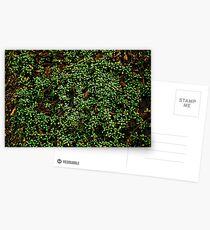 Texture vines with brick wall red bricks climbing green jungle vines and wild plants vintage eroded grunge style urban pattern Postcards