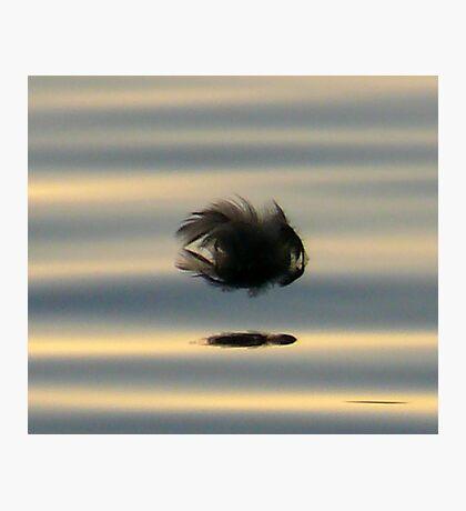 Lil Fish.. Photographic Print