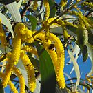 Wattle a Bee be  by 4spotmore