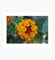 Lantana flower Art Print