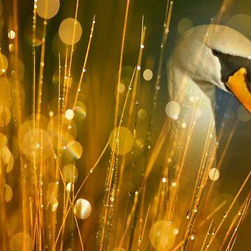 Swan  by OllieandQuinn