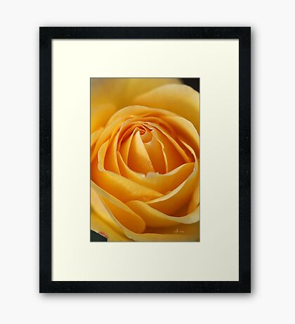 The Lemon Squeezer Rose Framed Print