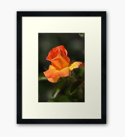 Before She Fades for Winter Framed Print