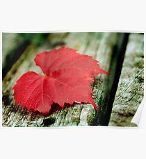 Autumn Texture Poster