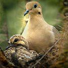 Nesting by gemlenz