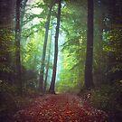 Cool Forest by Dirk Wuestenhagen