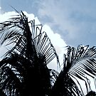 "Palms & Clouds "" by karenkirkham"