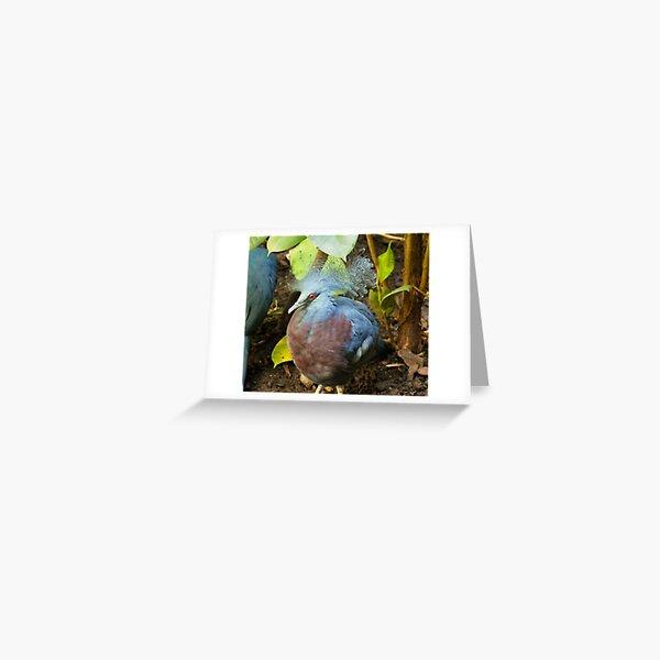 Victoria Crowned Pigeon. Greeting Card