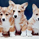 3 Corgi Puppies. by Edward Denyer