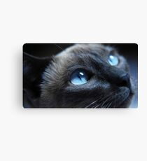 Cat by beautiful blue eyes Canvas Print