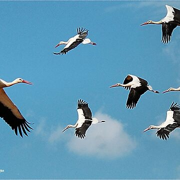 AND THEY WHERE THERE, A BLUE SKY FILLED WITH STORKS! by mags