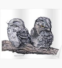 the Tawny Frogmouth Poster