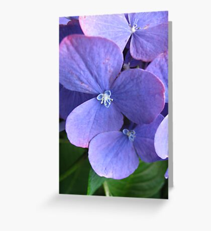 A Flower Within Greeting Card
